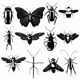 Insects and bugs in vector