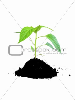 growing plant green and soil