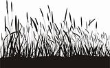 Grass On White Background, Isolated vector