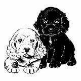 Vintage 1950s Puppies