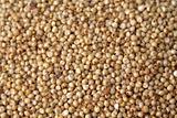 Jowar/Sorghum Grains