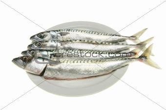 Four mackerel on plate