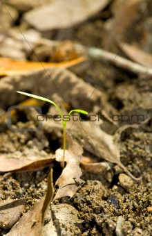 Tiny Sprout Emerges