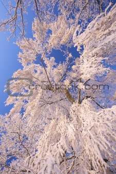 a winter landscape with frosted trees and a blue sky