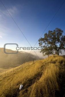 Litter on a grassy hillside