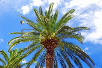 Palm over blue sky