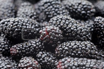 Blackberries background