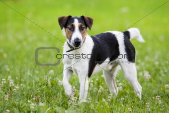 Little dog in the grass