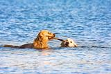 Two dogs in the water