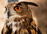 Eagle or Horned Owl