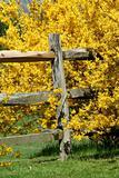 Yellow bushes