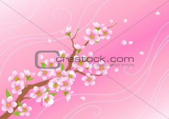 Blossoming branch with flying petals on a pink background