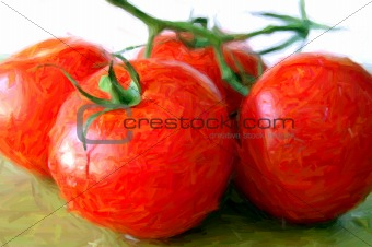 fresh tomatoes illustration
