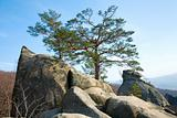 tree on rocks top