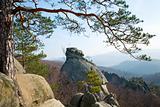 tree on rocks top