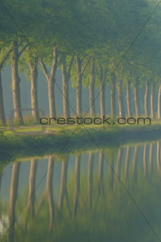 a row of trees in summer on a calm morning with fog with a reflection in the water