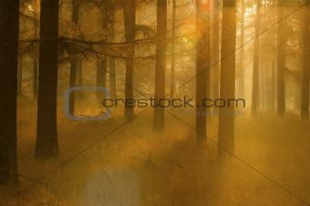 a forest in golden and orange autumn colors in Holland