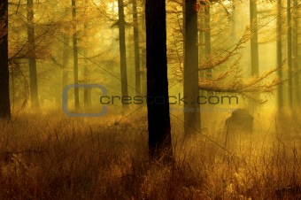 a forest in bright orange autumn colors in Holland