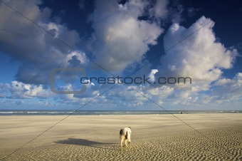 a dog walking on the beach in summer with a blue sky and white clouds