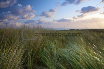 Dunes at the sea with grass and wind in Holland at sunset