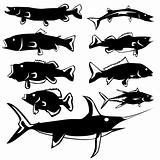 Stylized fish in vector silhouette