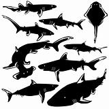 Sharks in vector silhouette