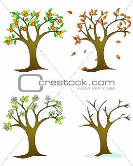 Four seasons – colorful trees
