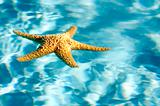 Floating starfish shell on blue water
