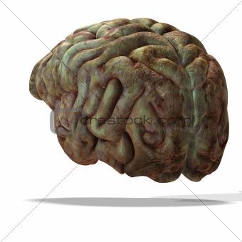 older human brain