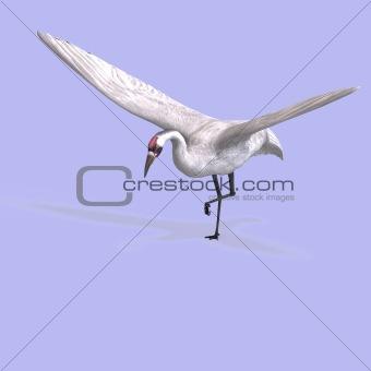 Great White Crane