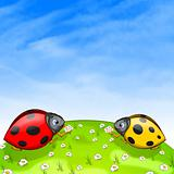 Ladybird Cartoon