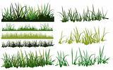 erba/grass