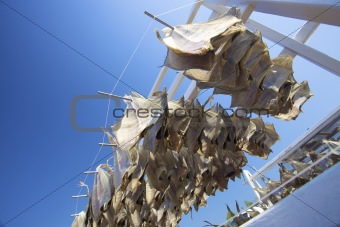fish hanging outside to dry with a blue sky in summer in Holland
