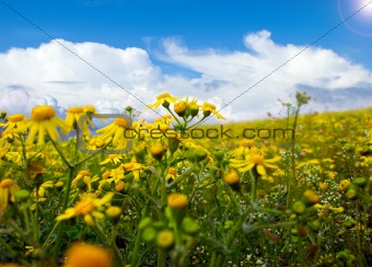 beautiful landscape photo in sunny day