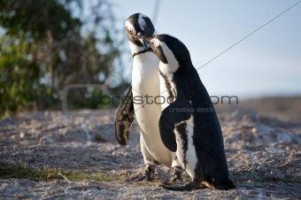 Animal couple