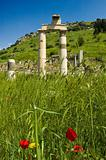 Columns and Poppies
