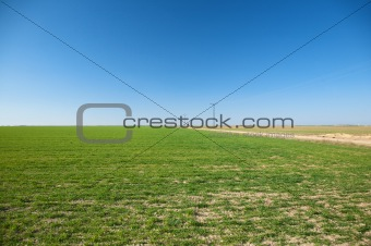 green field with electric towers
