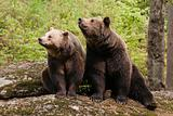 Two bears