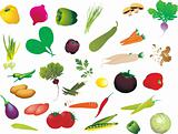 set of fresh vegetables isolated on white