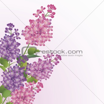 Bouquet of lilac blossoms