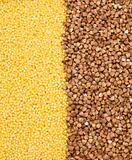Buckwheat and millet background