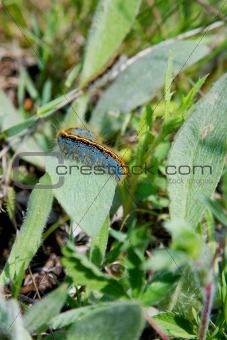 catepillar in green grass