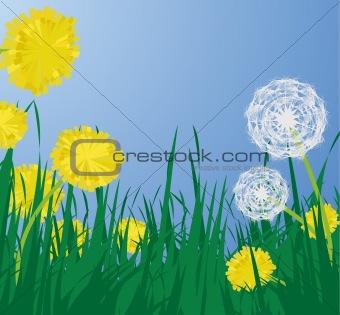 Dandelions, vector