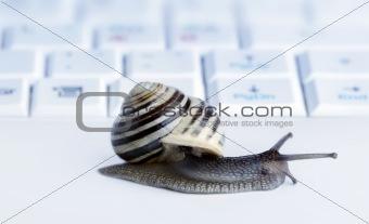 Close up of a snail