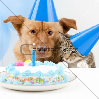Dog and Birthday party