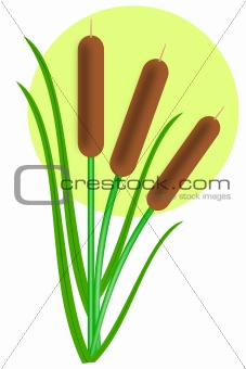 Three cattails with leaves