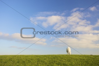 a lamb in a green field with a blue sky in summer