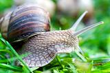 snail on a green grass