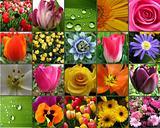 Flower Collage card