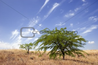 Green trees under the blue sky